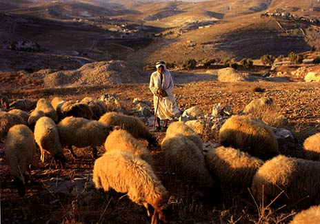 http://bibledaily.files.wordpress.com/2009/04/shepherd-sheep.jpg