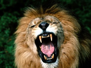 roaring-lion