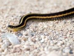 snake.stone